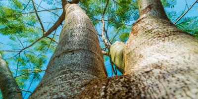 Rooting for You: Tree Planting Tips From B & B Tree Service, Forest, Mississippi