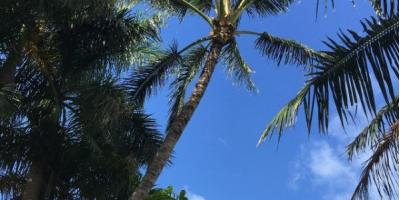 3 Benefits of Tree Pruning, Honolulu, Hawaii