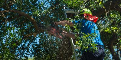 5 Benefits of Pruning Trees, Florence, Kentucky
