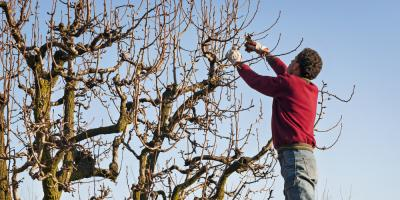 What Is the Best Season for Tree Pruning?, York, South Carolina