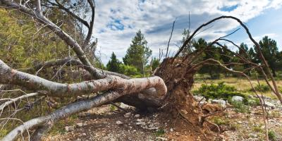 3 Signs You Need Tree Removal Services, West Hartford, Connecticut