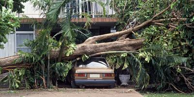 3 Reasons to Work With Tree Removal Professionals, Hilo, Hawaii