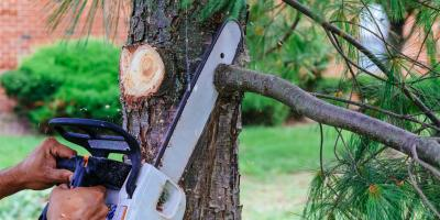 4 Steps for Safe Tree Removal, Miamitown, Ohio