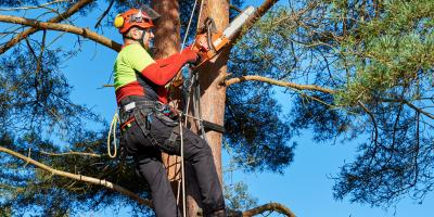 3 Reasons to Remove a Diseased Tree, Florence, Kentucky
