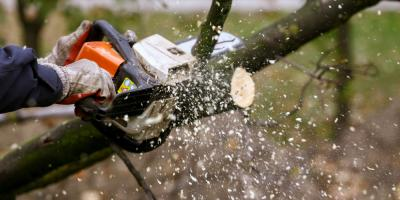 Top 5 Signs Your Tree Needs To Be Removed or Trimmed, Marshan, Minnesota