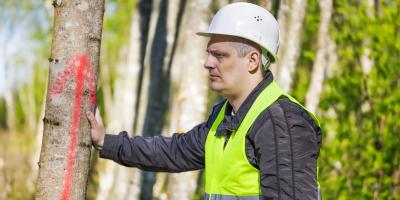 When Should You Call for Emergency Tree Service?, Honolulu, Hawaii