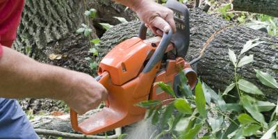 The Top 5 Questions to Ask Before Hiring an Insured Tree Service, Perryville, Missouri