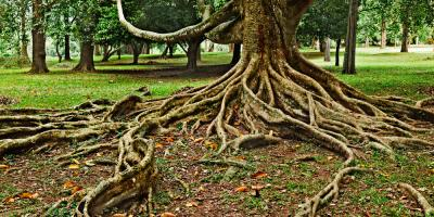 4 Major Signs of Root Damage That Require Tree Removal, York, South Carolina
