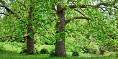 3 Reasons to Hire a Professional Tree Service, Madison, Ohio