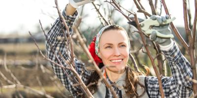 Tree Service Shares Top 3 Reasons Why Trees Need Pruning, Anchorage, Alaska