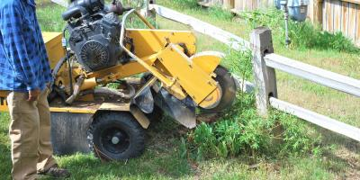 Tree Service Company Offers Reasons to Remove Stumps, Arpin, Wisconsin