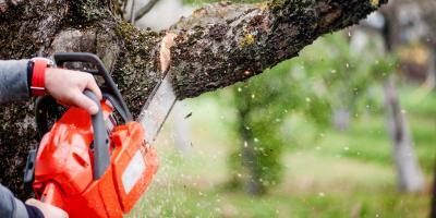 4 Reasons You May Need Emergency Tree Services, Dayton, Ohio