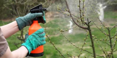 What to Do About Tree Pests, Berrett, Maryland
