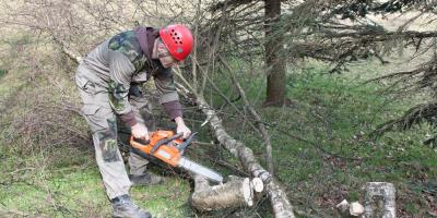 The Do's & Don'ts of Tree Maintenance, Newport-Fort Thomas, Kentucky