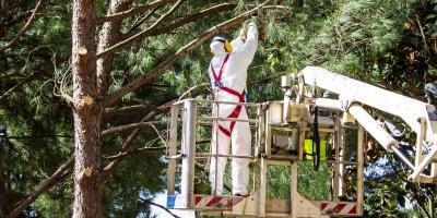 4 Benefits of Regular Tree Trimming, Hilo, Hawaii