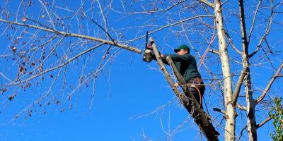3 Tree Trimming & Pruning Tips From Springfield's Landscape Experts, Springfield, Ohio