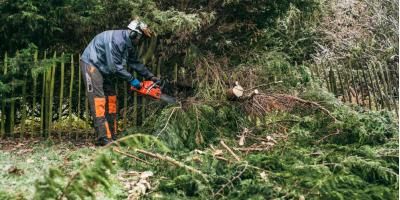 5 Important Benefits of Professional Tree Trimming & Pruning, Makawao-Paia, Hawaii