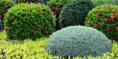 4 Gardening Tips for Healthy Shrubs, Crescent, Wisconsin