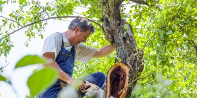3 Helpful Tree Care Tips for Summer, Anchorage, Alaska