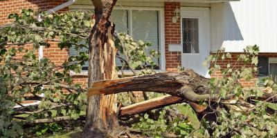 Certified Arborists Share 4 Tree Care Tips Following a Storm, Millersport, Ohio
