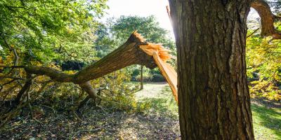 How to Determine the Need for Tree Removal, West Hartford, Connecticut