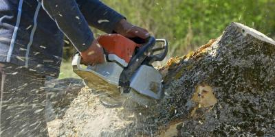 Falling Tree Liability: What Your Local Tree Service Company Wants You to Know, Ewa, Hawaii