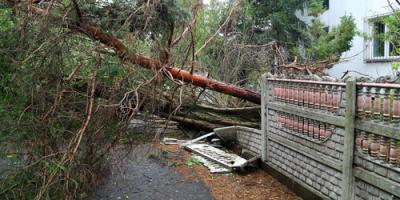 Why It's Difficult to Anticipate Storm Damage for Your Trees, Newburgh, New York