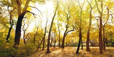 4 Tree Diseases That Are Common in Ohio, Cincinnati, Ohio