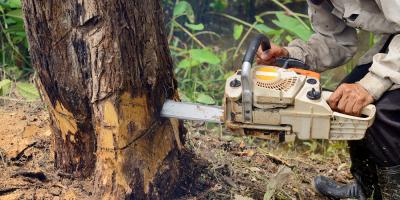 5 Reasons to Leave Tree Removal to Professionals, York, South Carolina