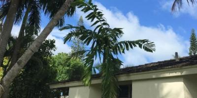 A Guide to Sudden Tree Deaths, Ewa, Hawaii