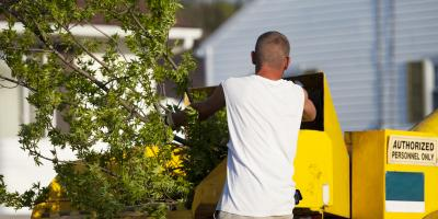 5 Signs You Need Tree Removal Services, Milford, Ohio