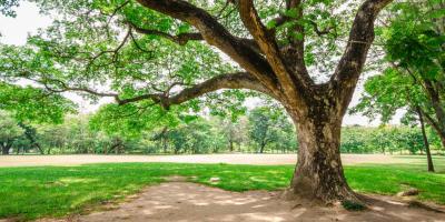 Your Local Tree Service Outlines 3 Common Tree Problems, Cincinnati, Ohio