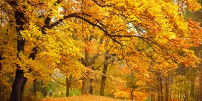 A Homeowner's Guide to Scheduling Tree Services , Cincinnati, Ohio