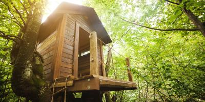 How to Select the Right Tree for a Treehouse, York, South Carolina
