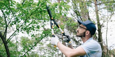 3 Reasons to Trim Your Trees, Jessup, Maryland