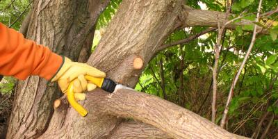 4 Benefits of Tree Trimming Services, St. Charles, Missouri
