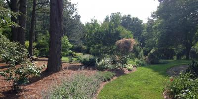What You May Not Know About the Communication Between Trees, Greensboro, North Carolina