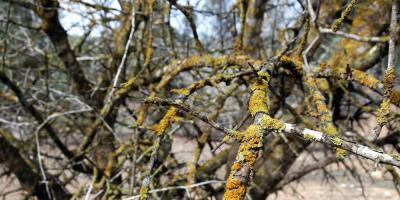Expert Tree Service Shares 4 Signs of Death in Trees, Seymour, Connecticut