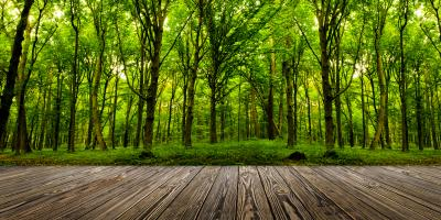 3 Signs of a Dead Tree, York, South Carolina