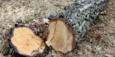 3 Great Reasons to Hire a Professional Tree Removal Company , Baldwin, Georgia