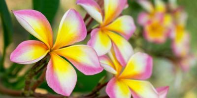 4 Tropical Flowers That Highlight Hawaii's Beautiful Weather, Koolaupoko, Hawaii