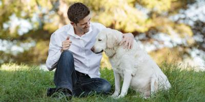 5 Pet Care Tips for Aging Dogs, Wentzville, Missouri