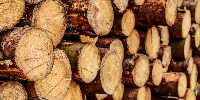 Veneer Logs: 3 Ways to Tell if You're Using Suitable Lumber, Middlefield, Ohio