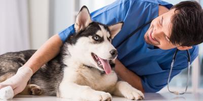 3 Pet Vaccinations Your Dog Needs , Rhinelander, Wisconsin