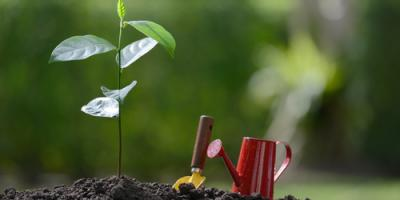 A Brief Guide to Deep Root Injections for Your Property's Trees, Lodi, California