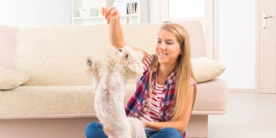 3 Dogs That Are Perfect for Your Pet-Friendly Apartment, Conway East, South Carolina