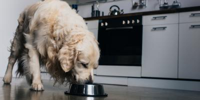 Why You Shouldn't Feed Your Dog Grain-Free Food, Versailles, Kentucky
