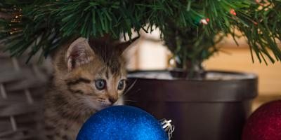 How to Keep a Cat Away From a Christmas Tree, ,