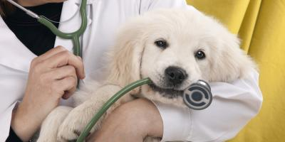 3 Tips to Alleviate Your Dog's Anxiety About the Veterinarian, Elk Grove, California
