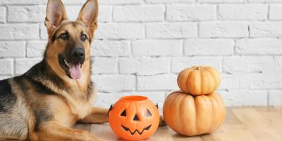 How to Keep Dogs Safe From Halloween Treats, Avon, New York